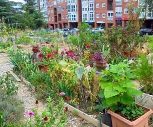 Bancales de cultivo en el Huerto Vecinal Villa Rosa (Fuente: www.naturalenda.es)