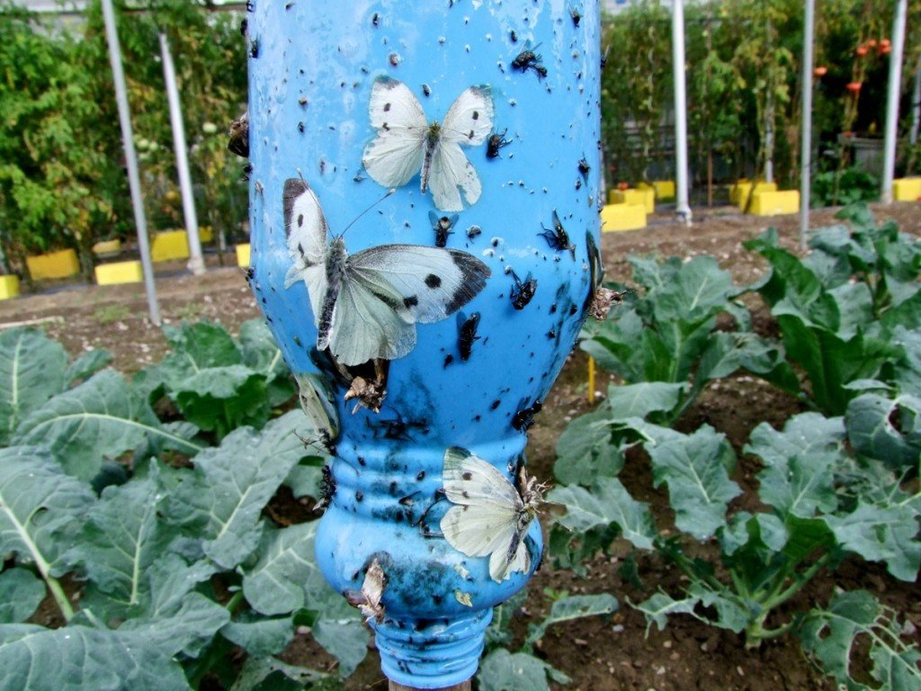 Insectos comunes del huerto y el jard n 11 tipos de for Insectos del jardin