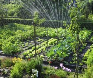 qué es un huerto ecológico