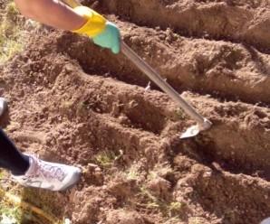 Cómo preparar el Terreno y hacer Surcos