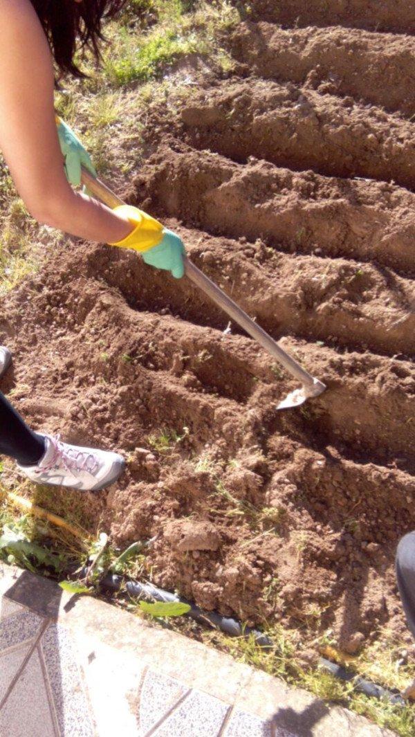 C mo preparar el terreno y hacer surcos for Preparar el huerto en invierno