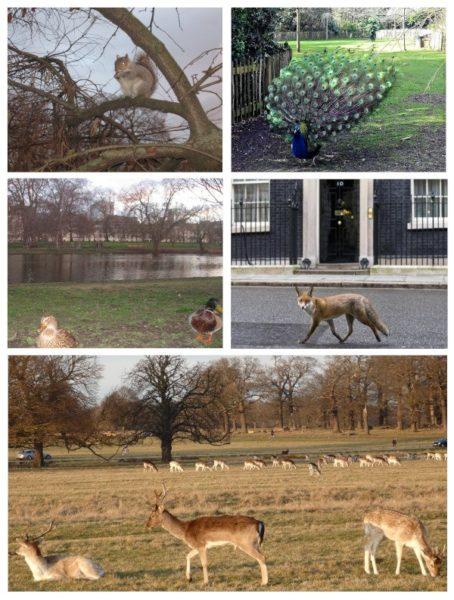 De izq. a drch. y de arriba a abajo: Green Park, Holland Park, St.James Park, número 10 de Downing Street, Richmond Park