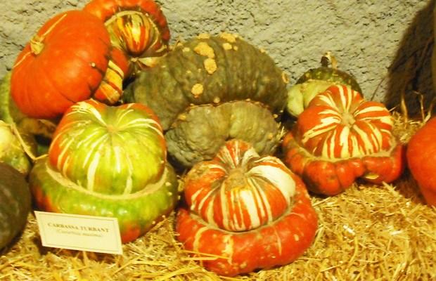 Calabazas turbante, ¿no son preciosas? (Fuente: www.marinasalvador.com)