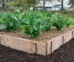 Bancales reciclados: Cómo delimitar el huerto