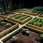 10 pasos para crear tu propio huerto en casa – Cómo cultivar. Guía fácil