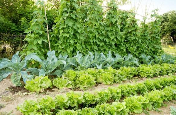 Un huerto a medida para ahorrar en la cesta de la compra - Que plantar en el huerto ...
