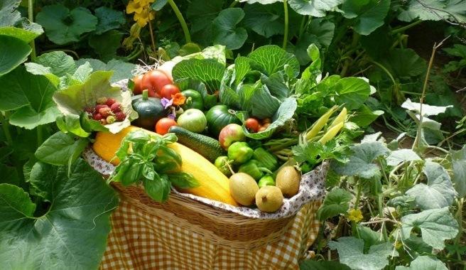 Cultiva verduras y hortalizas ecológicas para ahorrar en insumos (Fuente: www.jardinplantas.com)