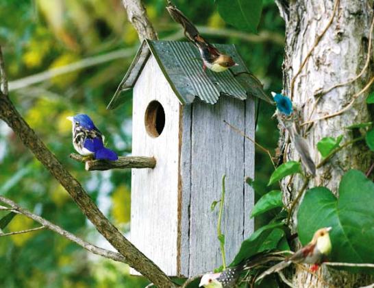 Además de servir de nido a las aves del lugar, es un elemento decorativo perfecto para el jardín (Fuente: www.labioguia.com)