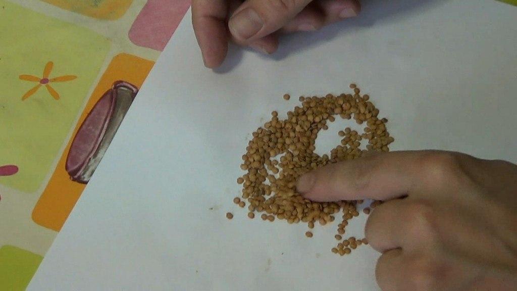 Semillas de berenjena (Fuente: www.lahuertadetoni.com)