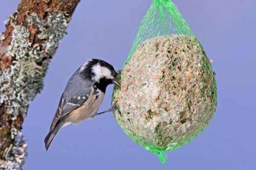 Cuelga bolas de grasa con semillas para atraer a los pájaros al huerto (Fuente: www.tiendanimal.es)