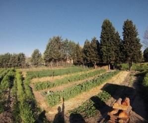 Aquí tenéis una perspectiva del huerto de agrofogones.