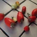 Culos podridos en Tomate: ¿Cómo solucionarlo?