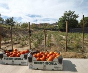 HUERTOS TERAPÉUTICOS |El huerto ecológico de la Fundación Trébol