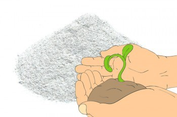 Deficiencia de calcio en el huerto. Agrohuerto