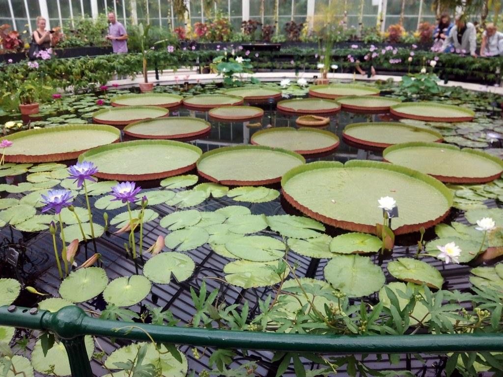 Nenúfares y otras plantas acuáticas en el Waterlily House