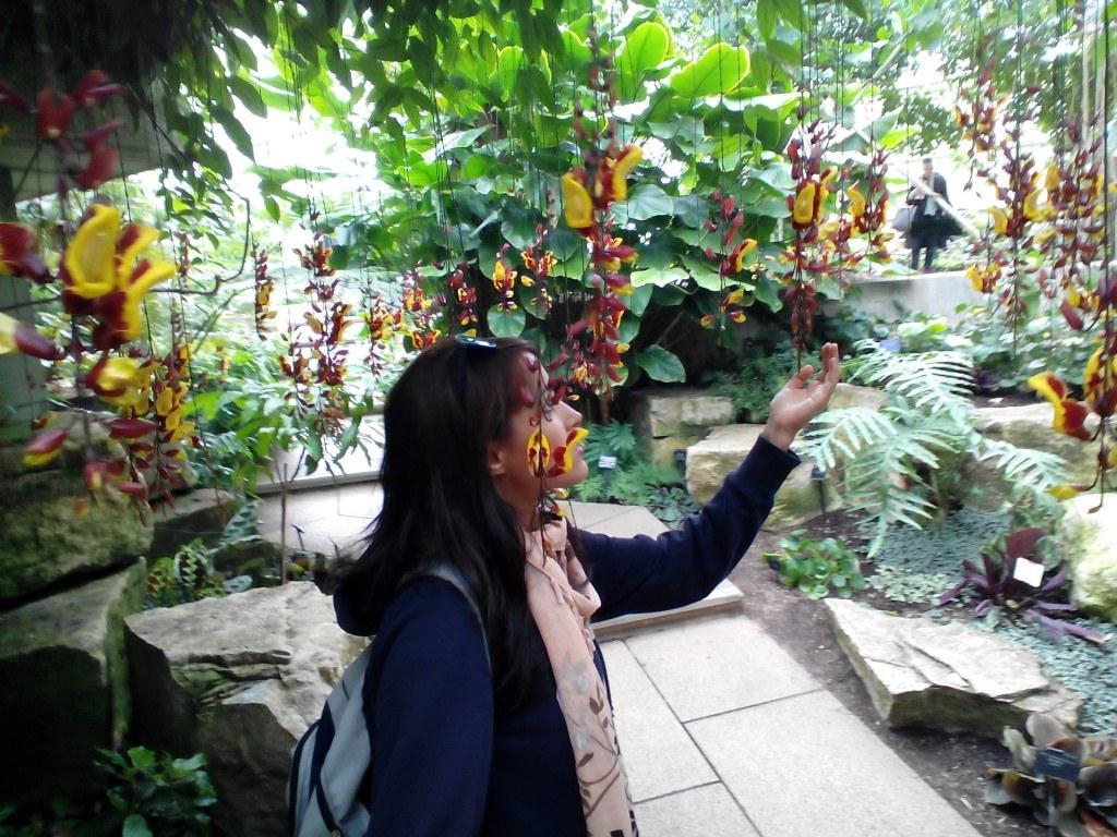 Orquídeas colgantes en el clima tropical...¡Parecen sacadas de un cuento!