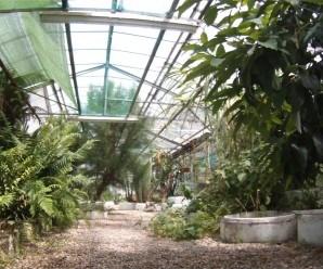 Aquí os dejo una perspectiva del interior del aula verde invernadero.