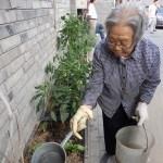 Agricultura urbana en China ¿por qué es necesaria?