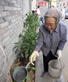 Agricultura urbana en los Hutones (Pekín)
