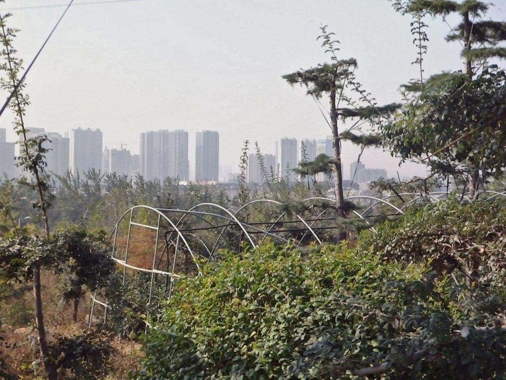 Naturación Urbana en Taian