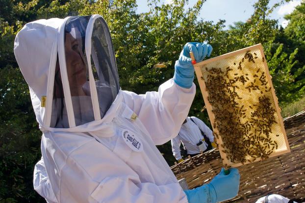 Apicultor con una de las colmenas de abejas de Kew Gardens. Fuente: www.kew.org