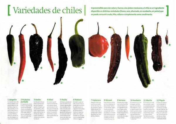 Aquí vemos una muestra de la gran cantidad de Chiles que existen. Fuente: www.chefamateur.wordpress.com