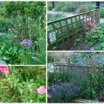 Plantas medicinales útiles en el huerto ecológico. 8 plantas que curan