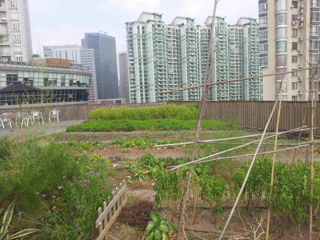 Shanghai: huertos en azoteas