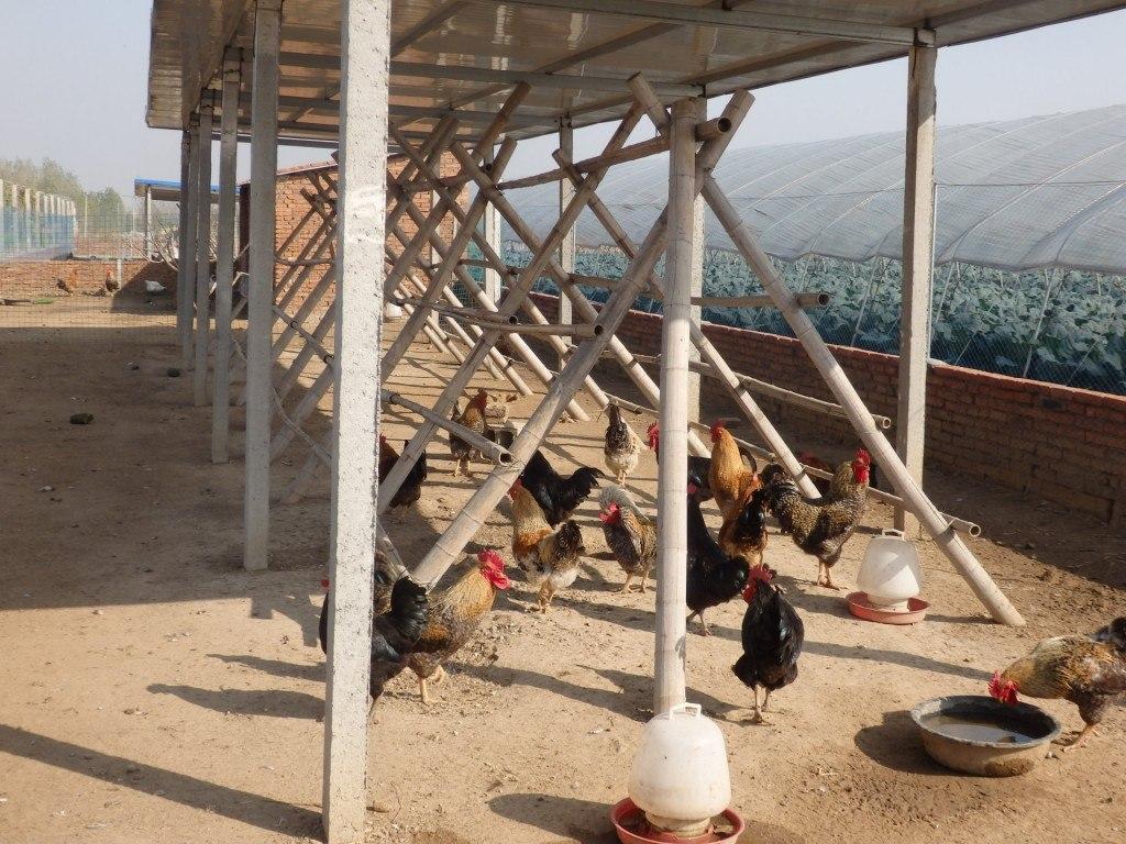 Tianze farm: Agricultura periurbana