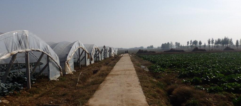 Agricultura periurbana en China: Tiance Farm, en Taian