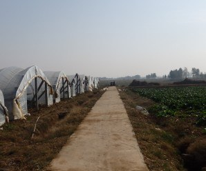 Agricultura periurbana en China