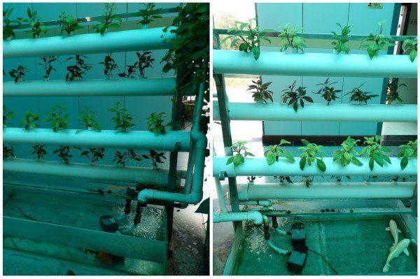 Cultivo hidropónico en China