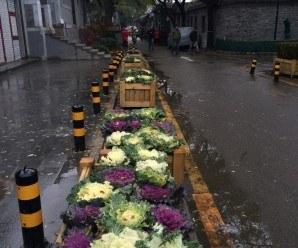 Agricultura Urbana China. Caminando por la calle