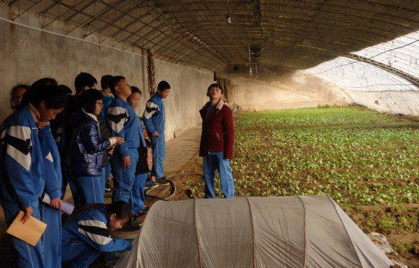 cultivar un huerto: Shangzhuang Middle School (Pekín)