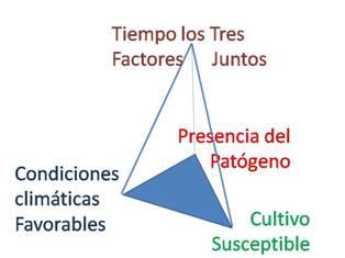 Pirámide de la enfermedad