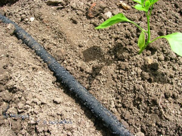 6 tipos de riego para tu huerto o huerta y cu les son sus - Tuberias de riego por goteo ...