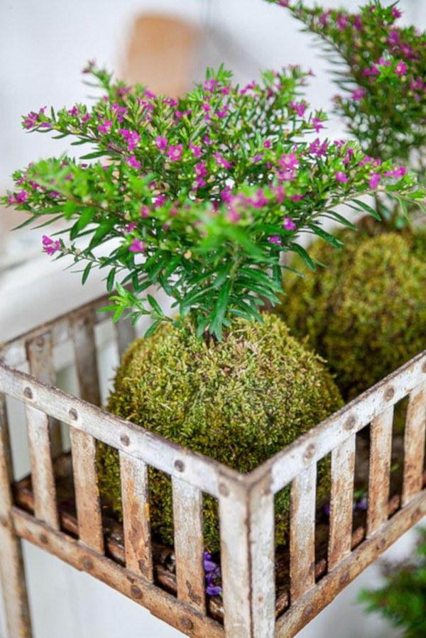kokedamas de flores