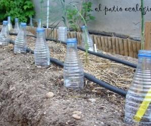 Combatir las hormigas negras en el huerto