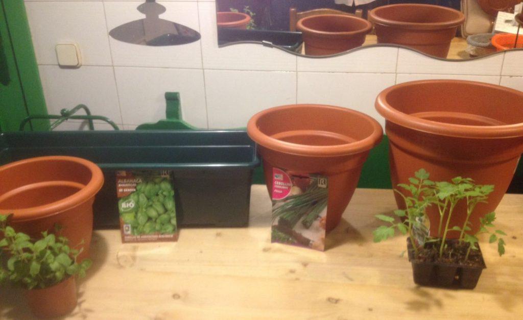 Plantas para nuestro macetohuerto: orégano, albahaca, cebollino y tomate cherry.