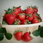 Plagas de las fresas y enfermedades. Identificar y controlar con remedios ecológicos