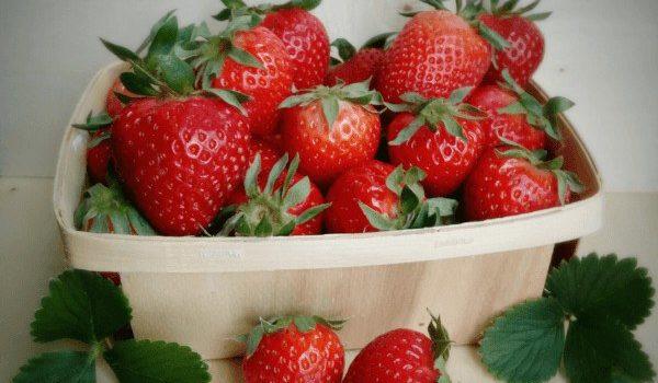 Las fresas son una de las plantas que necesitan poca luz