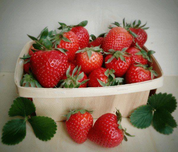 Cómo plantar Fresas y Fresones en maceta