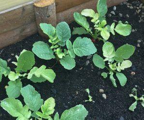 Jardinera con plagas o enfermedades: soluciones y tratamiento.