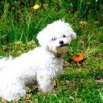 6 Manera de alejar las mascotas del huerto