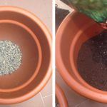 Cómo cultivar Aromáticas paso a paso
