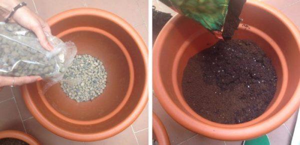 Rellenar los recipientes de cultivo para cultivar aromáticas