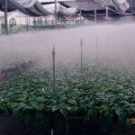 Riego por nebulización o Fog System: cómo instalarlo, ventajas e inconvenientes
