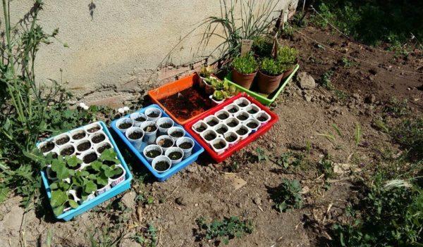 Semilleros de la Huerta Charli