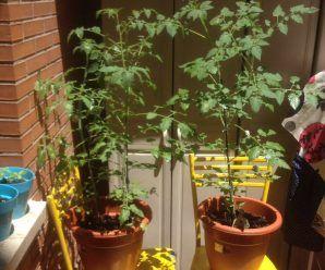 Huerto en jardinaras