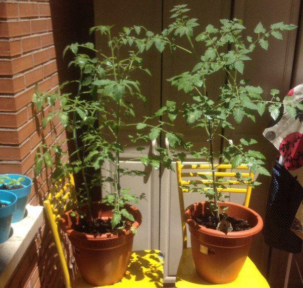 recipientes de cultivo para el huerto en jardineras